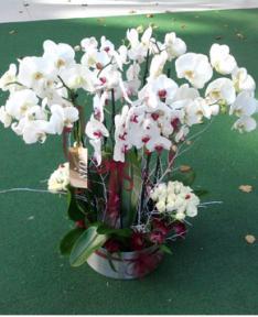 Orkide Grubu