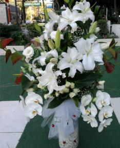 Lilyum ve Orkideler