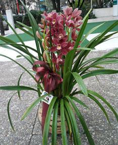 Orkideler 2